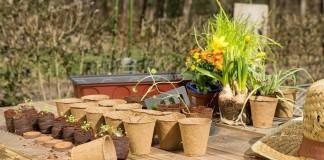 Лунный календарь посева цветов в апреле