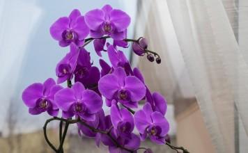 5 главных вопросов и ответов по уходу за орхидеями