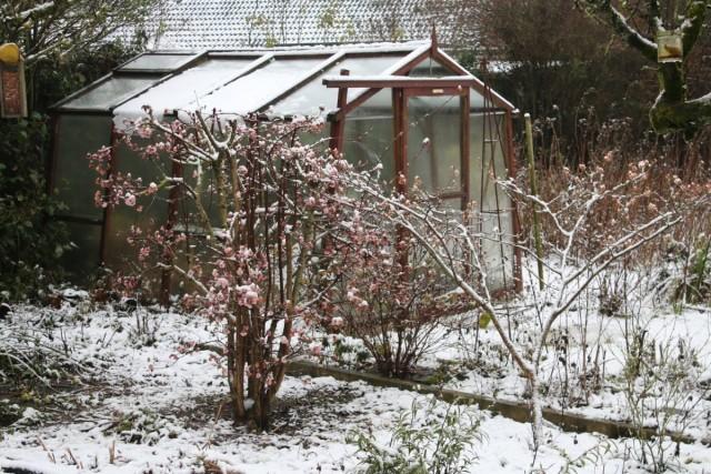 Cамое главное, о чём необходимо подумать ранней весной – как защитить свой сад от болезней и вредителей