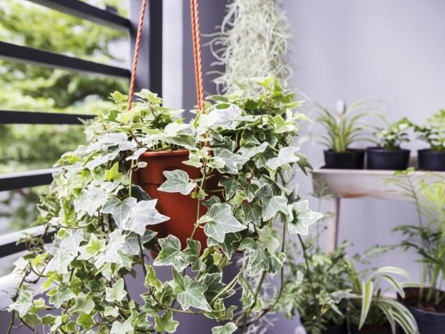 Абсолютно всем комнатным растениям весной пойдет на пользу свежий воздух