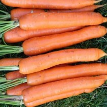 Морковь «Тушон»
