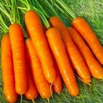 Морковь «Нантская 4»