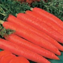 Морковь «Красный Великан»