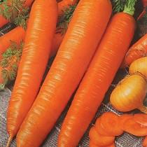 Морковь «Монастырская»