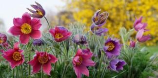 Апрельские краски сада, или Самые яркие растения середины весны