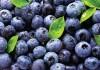 Ягоды голубики являются источником биологически активных веществ и витаминов