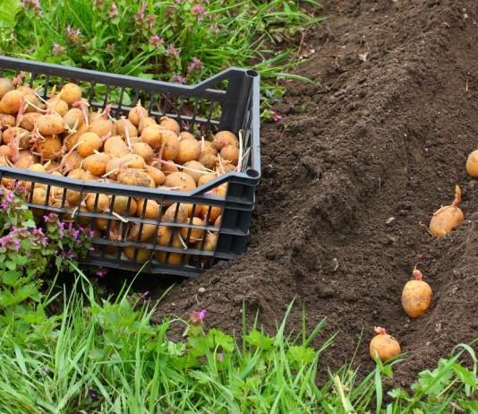 Лунный календарь посева овощей в мае