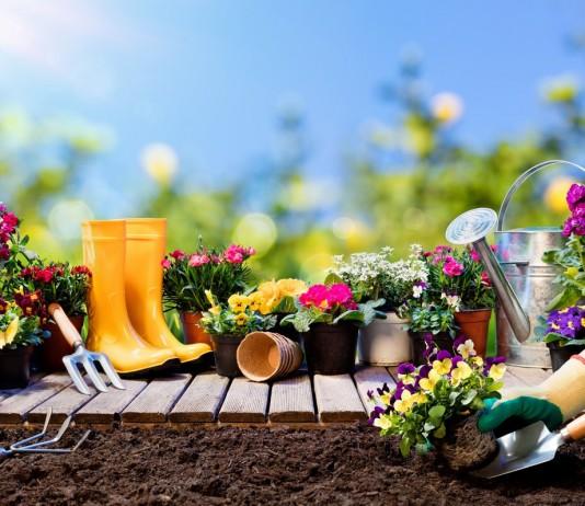 Лунный календарь посева цветов в мае