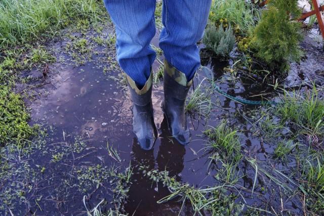 Весеннее затопление участка — как спасти растения?
