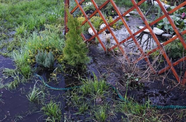 Не всем растениям в этой клумбе удалось пережить потоп