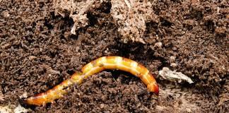 «Террадокс» – надёжное средство от почвенных вредителей