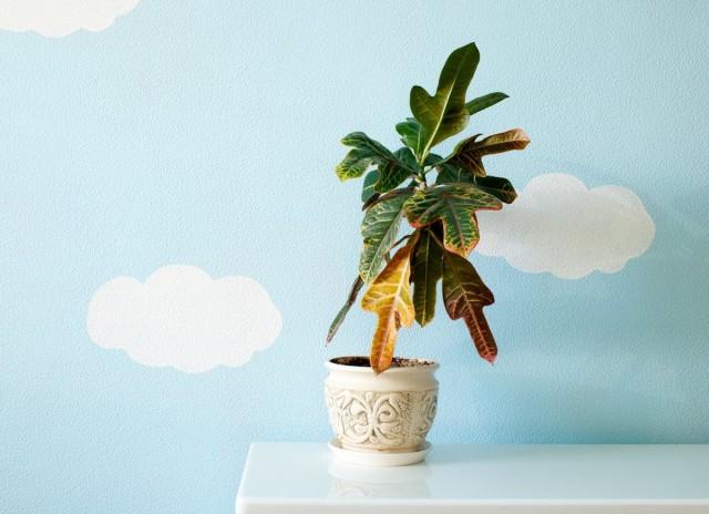 25 проблем комнатных растений, которые можно определить по листьям