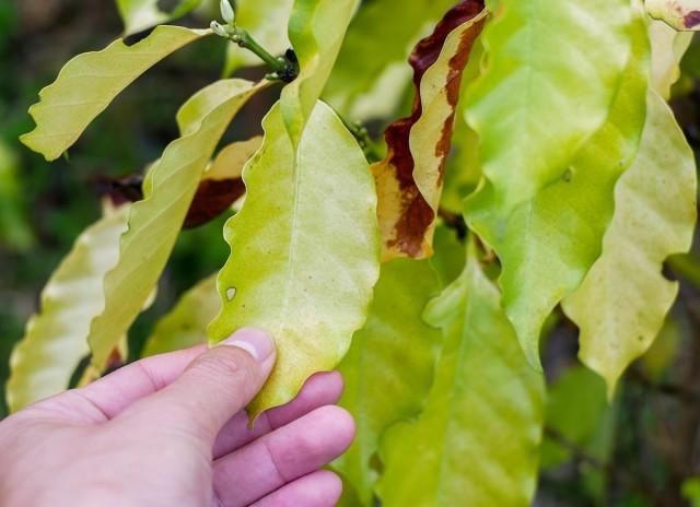 Признаки недостатка азота у растения
