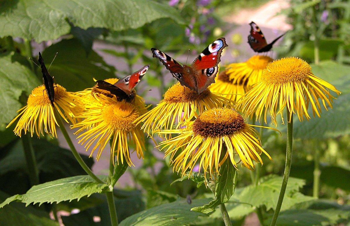 Butterfls