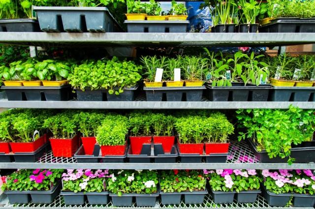 Как купить здоровую рассаду овощей и цветов