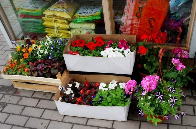 Рассада, купленная на рынке, нередко бывает заражена вредителями и болезнями