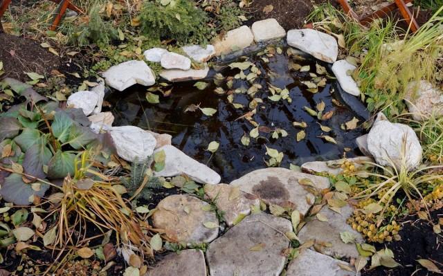 Осенью прудик требует наибольшего ухода, так как важно вовремя убирать листву