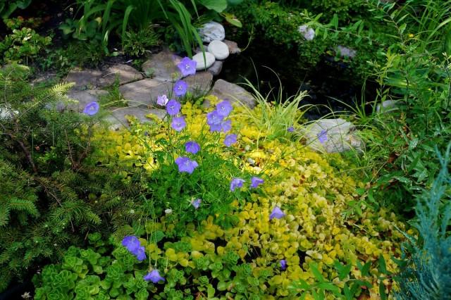 Мы установили пластиковый пруд в саду 7 лет назад
