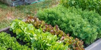 Лунный календарь посева овощей в июне