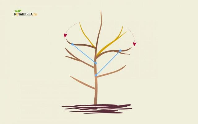 Если каркасные ветви имеют недостаточный угол наклона, то их оттягивают при помощи веревки или распорок