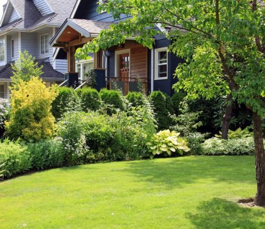Красивый газон — украшение участка