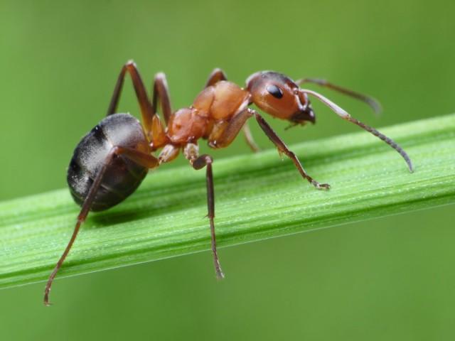 Отдыхать на газоне, по которому ползают муравьи, занятие малопривлекательное