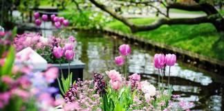Весна в саду, или Самые яркие растения мая