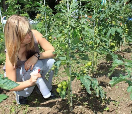 Биологизированная защита сада и огорода в июне