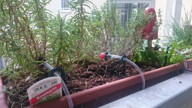 Некоторые цветоводы предпочитают постоянный капельный полив для своих комнатных растений