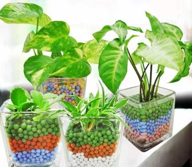 Выращивание растений на гидропонике позволяет обеспечить растения всем необходимым, даже если отпуск длится очень долго