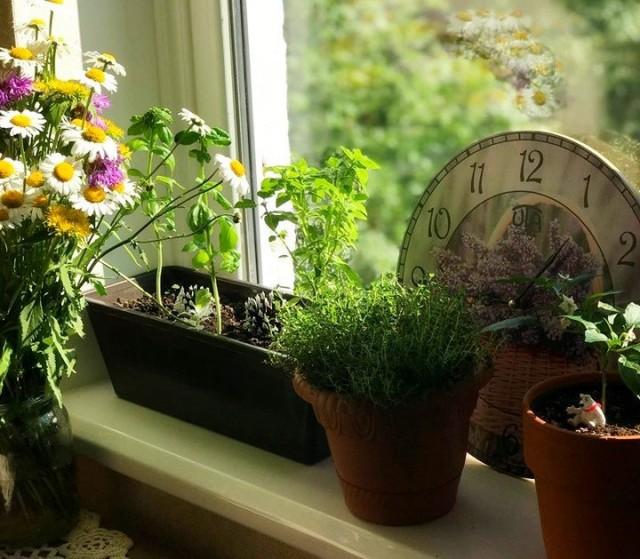 Прованские травы можно успешно выращивать и на подоконнике