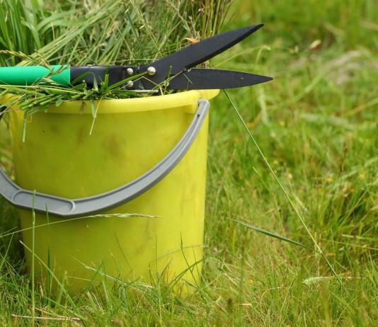 Готовим зелёное удобрение, или Как полюбить сорняки