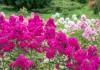 5 самых неприхотливых многолетних цветов, которые украшают мой сад в июле