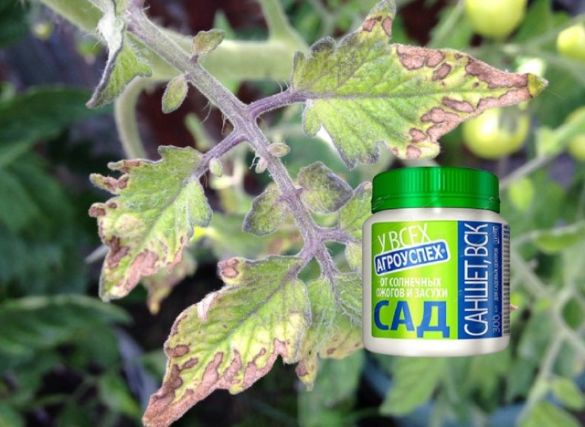 Саншет Агроуспех — для защиты растений от солнечных ожогов и засухи