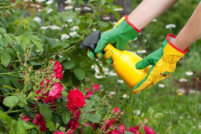 Внекорневые подкормки позволяют быстро восполнить недостаток того или другого элемента в питании растения