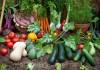 «Добавка микроэлементная удобрительная» — полноценное питание ваших растений