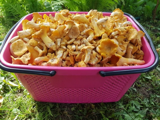 Лисички относятся к третьей категории грибов по питательности, самые ценные — грибы первой категории
