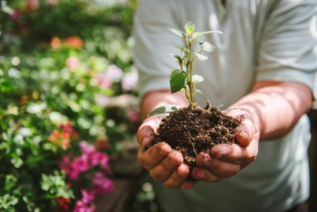 Летнее черенкование деревьев и кустарников — мифы и реальный опыт