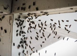 «Мухоед Cупер» — надежное средство от надоедливых мух
