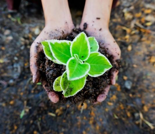 Способы повышения плодородия почвы
