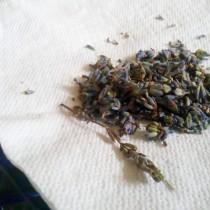 Лавандовый чай заваривают из её цветов