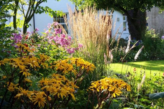 При выборе растений для цветников отдайте предпочтение стабильно декоративным, как, например, бузульник