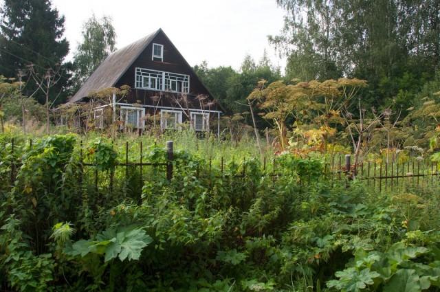 «Агрокиллер» — уничтожит злостные сорняки на участке