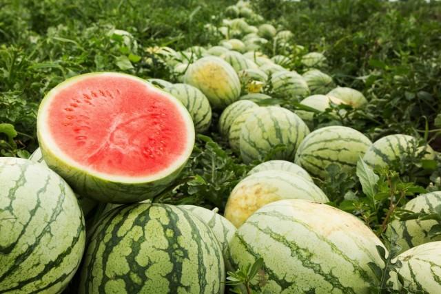 Арбуз — агротехника, интересные факты о растении и лучшие сорта