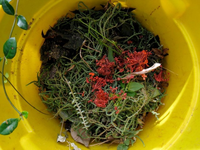 Можно использовать все отходы огорода, сада и окружающих пустырей