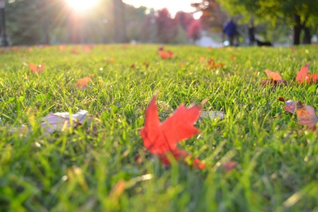 Грамотно подготовленный газон не боится зимы или засушливых периодов