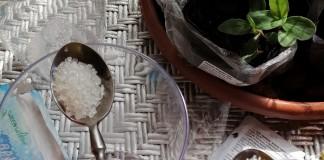 Гидрогель вместо частых поливов — мой опыт использования