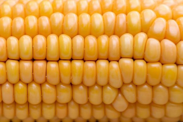 Полезная и вкусная кукуруза — как правильно варить, запекать и замораживать?