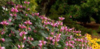 6 неприхотливых многолетников, которые украшают цветники в сентябре