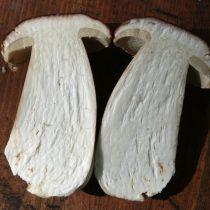 Юный белый гриб в разрезе
